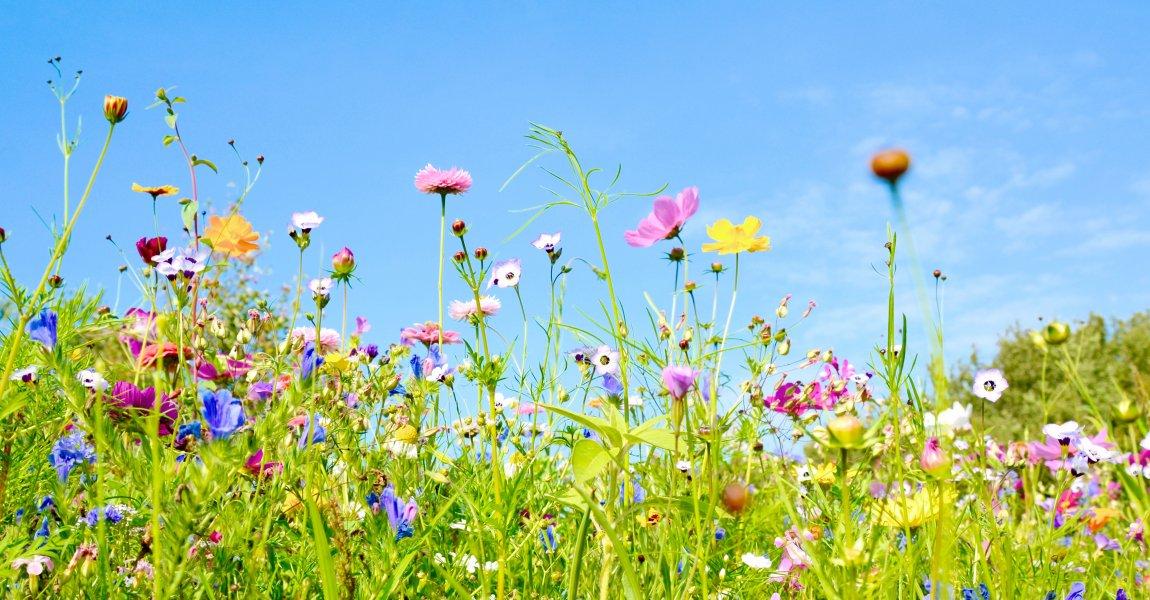 Bienenfreundliche Blumenwiesen im Kurpark Bad Salzuflen?